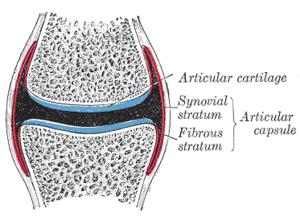 membrana sinovial artritis reumatoide