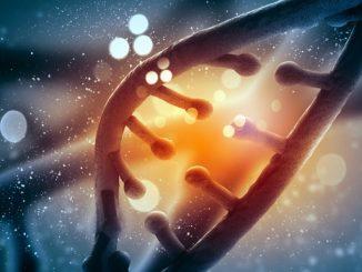 Equipo de investigación internacional descubre un gen vinculado al trastorno de inmunodeficiencia variable común